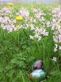 Huevos en una hierba verde Imagenes de archivo