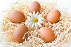 Huevos en una jerarquía Fotos de archivo libres de regalías