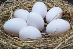 Huevos en una jerarquía Imagen de archivo libre de regalías