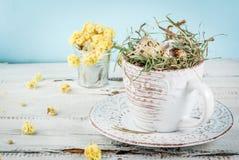 Huevos en una jerarquía en una taza de café vieja Imágenes de archivo libres de regalías