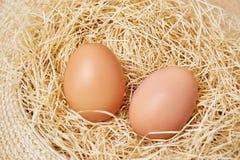 Huevos fijados en paja Fotografía de archivo libre de regalías