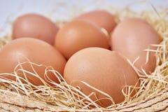 Huevos fijados en paja Imagen de archivo libre de regalías