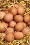 Huevos frescos Fotos de archivo libres de regalías