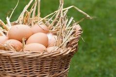 Huevos frescos Foto de archivo