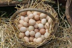 Huevos frescos apenas puestos Fotografía de archivo