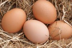 Huevos frescos de la granja Foto de archivo
