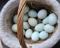 Huevos frescos de la granja en cesta Imágenes de archivo libres de regalías