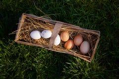 Huevos frescos de la granja en una cesta Fotos de archivo