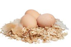 Huevos frescos de la granja orgánica Imagenes de archivo