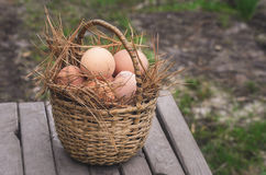 Huevos frescos del país del pollo Imagenes de archivo