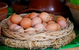 Huevos frescos del pollo con la jerarquía fotografía de archivo