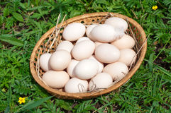 Huevos frescos del pollo en una cesta Fotos de archivo libres de regalías