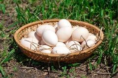 Huevos frescos del pollo en una cesta Imagen de archivo libre de regalías