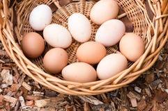 Huevos frescos en cesta de mimbre Imágenes de archivo libres de regalías