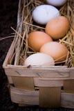 Huevos frescos en cierre de la cesta para arriba Foto de archivo