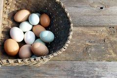 Huevos frescos en el verano Sun Fotos de archivo libres de regalías