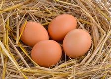 Huevos frescos en la paja del arroz Imágenes de archivo libres de regalías