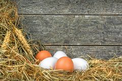 Huevos frescos en paja Foto de archivo libre de regalías