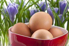 Huevos frescos en taza roja con las azafranes Imagen de archivo libre de regalías