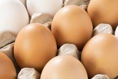 Huevos frescos en un cartón Imagenes de archivo