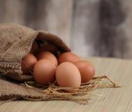 Huevos, lanzamiento macro de huevos marrones en la jerarquía del heno en granja de pollo Fotografía de archivo libre de regalías