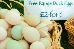 Huevos libres del pato de la gama Imagen de archivo