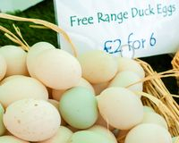 Huevos libres del pato de la gama Fotografía de archivo