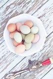 Huevos libres del rango Fotografía de archivo libre de regalías
