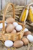 Huevos libres frescos de la gama Fotos de archivo