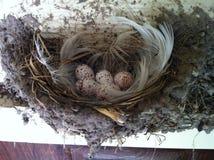 Huevos manchados Foto de archivo libre de regalías