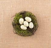 Huevos manchados de marfil en jerarquía Imagen de archivo