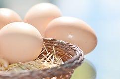 Huevos marrones crudos foto de archivo libre de regalías