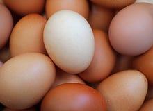 Huevos marrones frescos del pollo, cierre para arriba Imagen de archivo libre de regalías