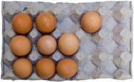 Huevos marrones frescos en cartón Imagen de archivo libre de regalías