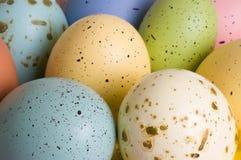 Huevos naturales del pájaro Fotografía de archivo