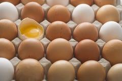 Huevos orgánicos Foto de archivo libre de regalías