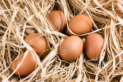 Huevos orgánicos del marrón fresco del pollo en la paja Fotos de archivo libres de regalías