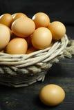Huevos orgánicos del pollo del brouw de la granja de granja Imagenes de archivo