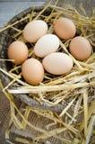 Huevos orgánicos frescos en una cesta de mimbre Imagen de archivo libre de regalías