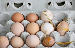Huevos orgánicos frescos sucios Fotos de archivo libres de regalías