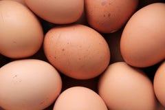 Huevos para cocinar Fotos de archivo libres de regalías