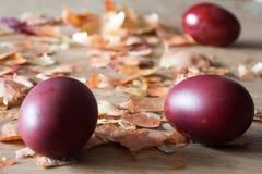 Huevos, pintados con las cáscaras de la cebolla Huevos de Pascua y cáscaras de la cebolla Imágenes de archivo libres de regalías