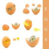 Huevos, pluma y pollo Fotografía de archivo libre de regalías
