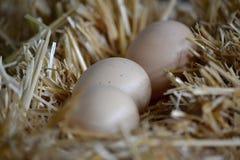 3 huevos puestos en la paja Foto de archivo libre de regalías