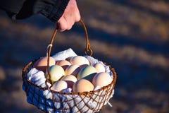 Huevos que llevan en una cesta Imagen de archivo libre de regalías