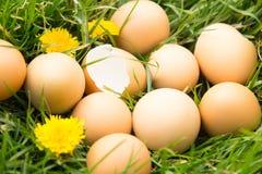 Huevos quebrados en hierba Fotografía de archivo