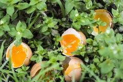 Huevos quebrados en hierba Foto de archivo