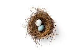 Huevos quebrados en jerarquía del pájaro foto de archivo