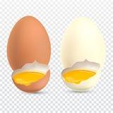 Huevos realistas del pollo de dos clases con la yema de huevo libre illustration