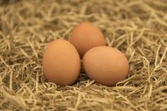 Huevos recientemente escogidos con la paja Huevos frescos en una hierba de la paja del heno Imagen de archivo